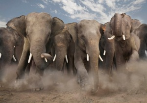 Rand Paul ignited an elephant stampede
