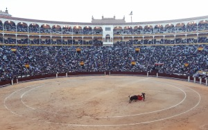public-domain-images-Free-Stock-Photos-spain-Madrid-Corrida-1000x629
